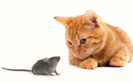 cat and mouse - photo (c) Fotolia